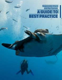Diving with Sharks - Good or Bad? - SCUBA News