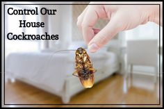 What Are The Different Types Of House Cockroaches?