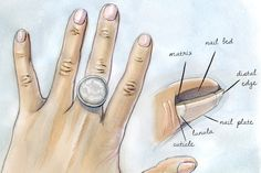 What's Your Nail Type? The shape, length and width of your nails influence more than your polish color; they're harbingers of your heath.