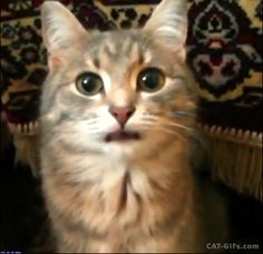 """CAT GIF • Funny cute Cat loves to stick her pink tongue out. """"He was pretending to be a dog there for a moment?"""""""