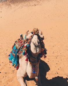 Camelinho