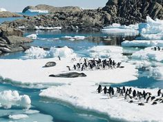 Nature's beauty ... Adelie penguins and leopard seals rest on ice floes in Rauer Island, East Antarctica.