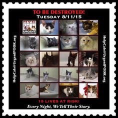 NYC!! Come On - **19 More Innocent Lives TO BE DESTROYED!!!! 08/11/15 - - GOES ON EACH DAY LIKE IT IS OK!!! **IT IS *NOT* OK!!! -INCOMPREHENSIBLE - The Killing Has To STOP!! Click for info & Current Status: http://nyccats.urgentpodr.org/montage-071215/