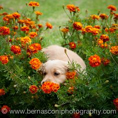Christine Bernasconi did a fab photoshoot with the new litter. SO CUTE if we do say so ourselves.