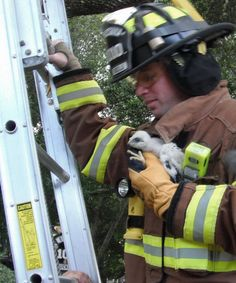 Firefighters rescue baby hawk | Shared by LION