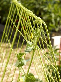 One green double panels cucumber trellis for cucumber plants Cucumber Trellis, Cucumber Plant, Diy Trellis, Garden Trellis, Trellis Ideas, Plant Trellis, Raised Flower Beds, Raised Garden Beds, Raised Beds