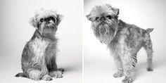 Briscoe: 1 ano / 10 anos