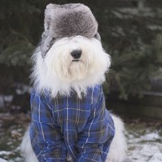 I is feeling very Canadian and very sexy.