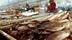 Harga Lebih Tinggi Alasan Mayoritas Nelayan Batam Pilih Jual Ikan ke Singapura   selengkapnya:  http://www.isw.co.id/single-post/2016/10/15/Harga-Jual-Lebih-Tinggi-Alasan-Mayoritas-Nelayan-Batam-Piih-Jual-Ikan-ke-Singapura