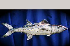 Raku fish Spanish Mackerel Spanish Mackerel, Fish Sculpture, Ceramic Animals, Underwater Photos, Going Fishing, Clay, Pottery, Australia, Craft Ideas