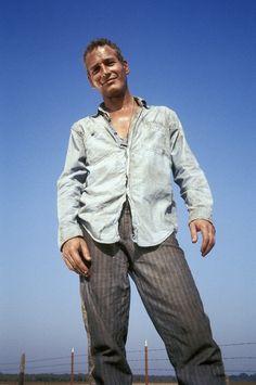 "hollywood-portraits: "" Paul Newman in Cool Hand Luke (1967). Dir: Stuart Rosenberg """