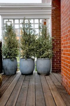 Great Privacy Idea For Your Deck... | Gardening...Landscape | Pinterest |  Planters, Decks And Rooftops