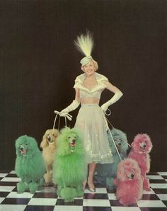 move aside Doris Day, my poodles will eat  yours