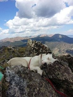 Beautiful shot. Bet that doggy is tired after the climb.
