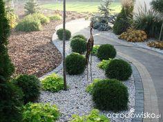 Metamorfozy ogrodowe - strona 99 - Forum ogrodnicze - Ogrodowisko