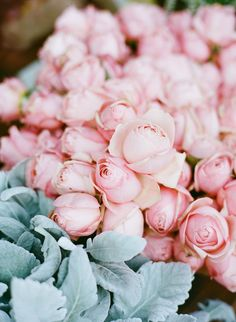 Light pink flowers are calling your name. Go ahead and pick up three or four bouquets - we won't judge (;