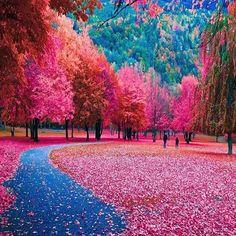 Autumn colors in Switzerland 🇨🇭 Photo by @doounias #TourThePlanet