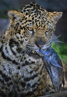Catch of the Day by Ion Moe