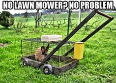 I could use an upgraded push mower, but no Lawn Boys! A 3.5 Briggs and Stratton would be nice....lol