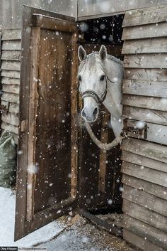 FARMHOUSE – ANIMALS – horse would like whoever left the door open to shut it.