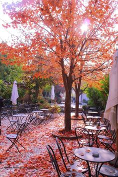 Autumn is the perfect time for dining al fresco Autumn Day, Autumn Home, Autumn Leaves, Red Leaves, Parks, Autumn Scenes, Best Seasons, Fall Season, Beautiful World