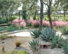 Above: In the Texas hill country, a gravel garden designed by D-Crain relies on the inviting shape of pink Muhlenbergia to visually soften the sharper edges ...