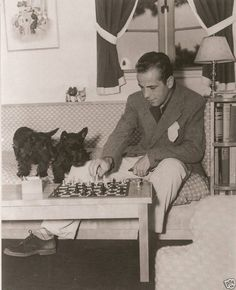 Humphrey Bogart plays chess with Scottish Terriers
