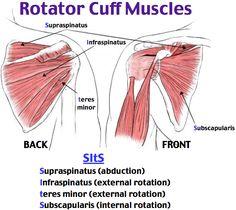 Rotator Cuff Impingement and Tear Supraspinatus (abduction) Infraspinatus (external rotation) Teres minor (external rotation) Subscapularis (internal rotation) + Neer and + Hawkins Pain with brushing hair or teeth Pain at night when rolling onto shoulder Baseball pitchers