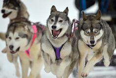 Dog Sled Racing, Freezing Temperatures, Celebrations in India