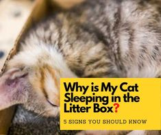 Why is my cat sleeping next to his litter box? Sleeping in the litter box is a weird behavior that is usually seen in kittens. However, if your adult cat. Best Cat Litter, Litter Box, Cat Care Tips, Dog Care, Sleeping Kitten, Cat Health, Dog Behavior, Cool Cats, Dog Training