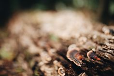 Photo by Tessa Cheetham #leaves #plants #forest #nature #outdoors #green #bushes #trees #mountglorious #australia #photography #naturephotography #free-lens #free-lensphotography #freelensphotography #mushroom #fungus #log