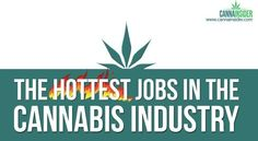CannaInsider.com Estimates 200,000 New Jobs In the Which Have Legitimized the Cannabis Industry by the End Of 2015