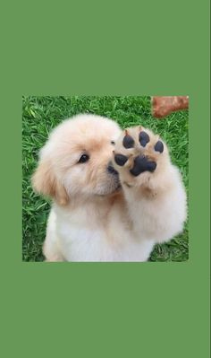 Cute Baby Dogs, Cute Cats And Dogs, Cute Dogs And Puppies, Dog Wallpaper Iphone, Cute Dog Wallpaper, Iphone Backgrounds, Animal Wallpaper, Cute Animal Photos, Cute Animal Pictures