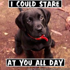 Creepy Dog Stare