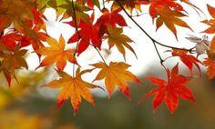 Sonbahar, Yağmur, Hüzün