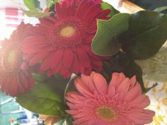 Becky, our General Manager, gave us these gorgeous flowers to celebrate the salon's 11th anniversary! Ain't she sweet?