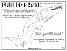 Free printable coloring pages Shark Week: Frilled Shark Coloring Fact Sheet. Artworkjulius intended for Frilled Shark Coloring Pages and others free printable coloring pages for kids and adults! Shark Coloring Pages, Fish Coloring Page, Coloring Pages For Kids, Coloring Books, Frilled Shark, Shark In The Ocean, Shark Activities, Shark Facts, Species Of Sharks