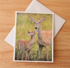 4.25x5.5 (A2) blank greeting card / with white envelope