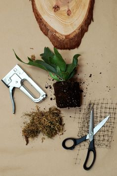 Make a mounted staghorn fern.