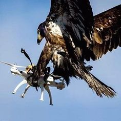 This eagle catching a drone. Drone Photography, Animal Photography, Nature Photography, African Crowned Eagle, Cool Pictures, Funny Pictures, Welcome Photos, Rich Dad, Big Bird