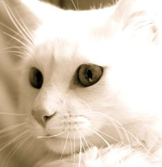 """""""You can keep a dog; but it is the cat who keeps people, because cats find humans useful domestic animals.""""- George Mikes"""