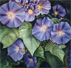 morning glory paintings | Morning Glory Painting Summer on my morning glory