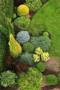 Fabulous garden of evergreen that'll look good all year (5)