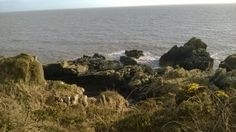 Gulls on rocks on the Solway coast near Portling. March 2014