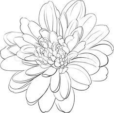 Chrysanthemum Drawings for Tattoos | Japanese Chrysanthemum Drawing Stock vector of 'chrysanthemum
