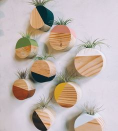 Circle Air Plant Magnet - All For Herbs And Plants Awesome Woodworking Ideas, Cool Woodworking Projects, Woodworking Joints, Fine Woodworking, Wood Projects, Highland Woodworking, Woodworking Supplies, Woodworking Videos, Air Plant Display