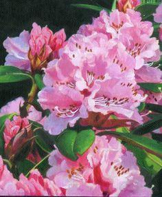 Rhododendron Titi Garelli