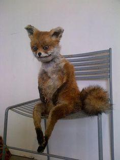 bad-taxidermy-fox.jpg (375×500)