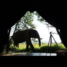 As majestic as they are, Elephants make for poor room mates. Best if they just come by for a visit! #DuniaCamp #serengeti #Tanzania
