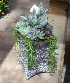 Vertical succulent arrangement with thrillers, fillers and spillers